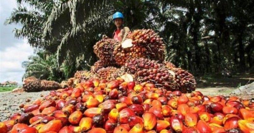 Diduga Ada Kerja Paksa, AS Blokir Impor Minyak Sawit Malaysia
