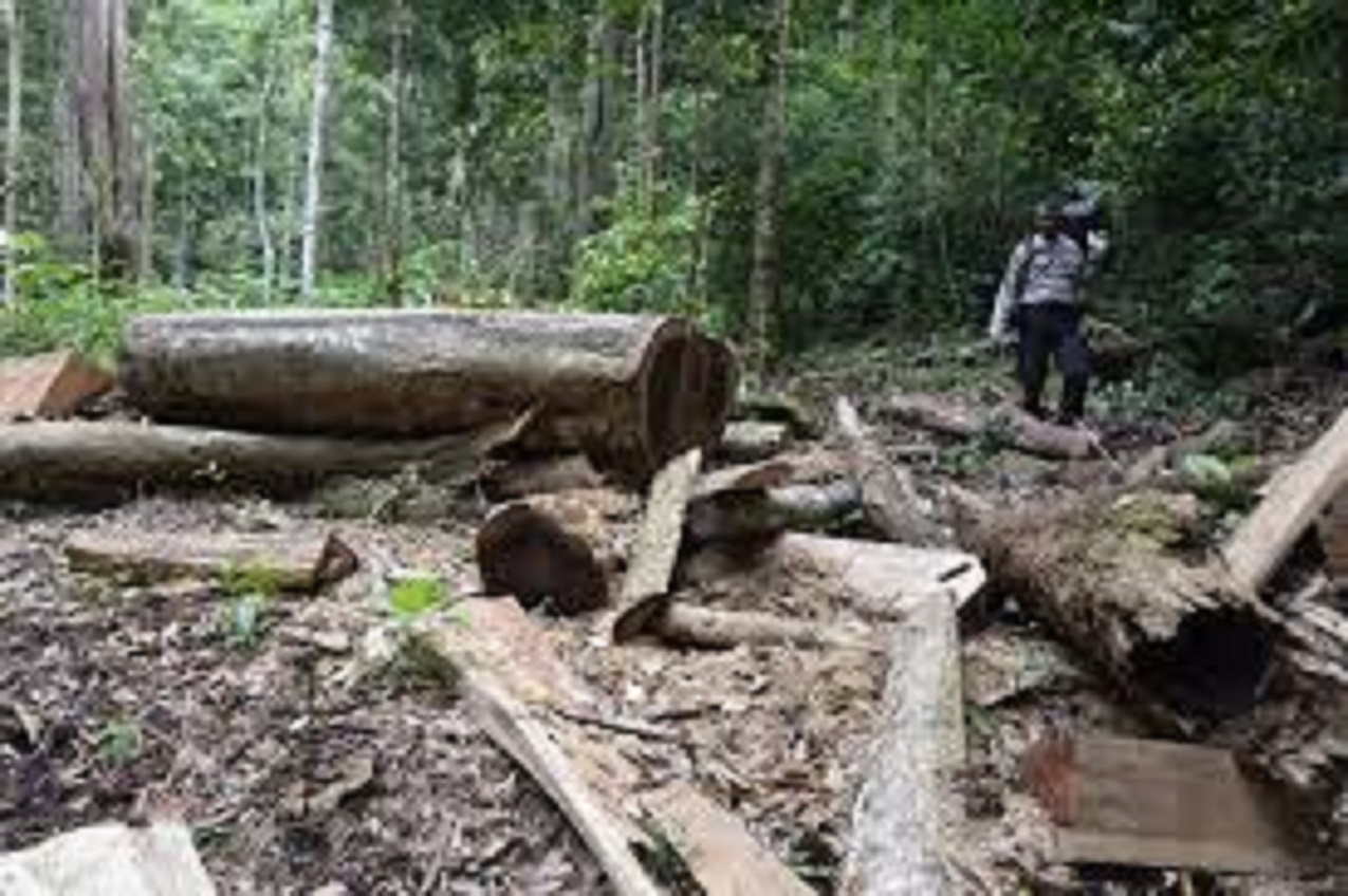 Kejati Sultra Telusuri Potensi Kerugian Negara dari Pemanfaatan Hutan untuk Tambang